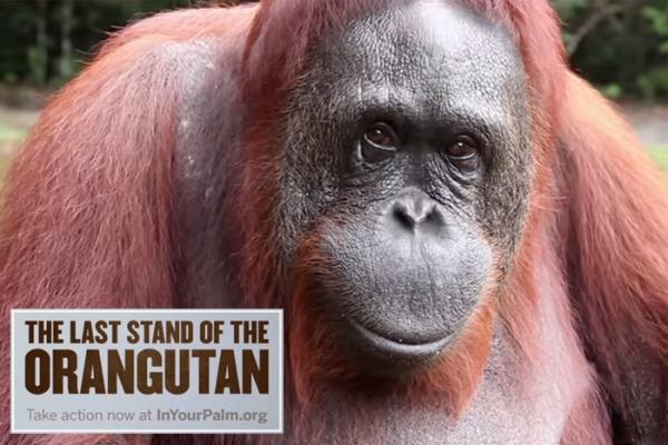Orangutans Palm Oil
