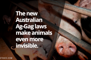 Ag-Gag Bill Passes in NSW Parliament