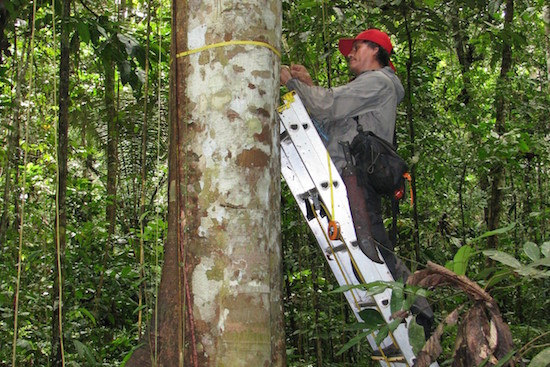 Amazon Trees Dying, Absorption of Carbon Dioxide Declines