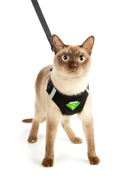 Cat enclosures walking lead leash