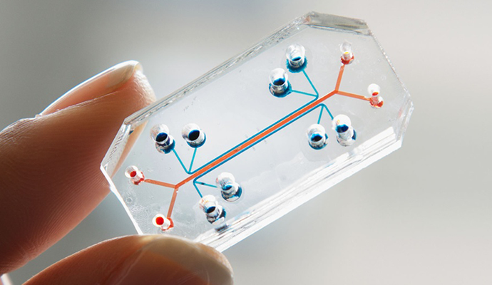 3D Bioprinting and Chips: The End of Animal Testing?