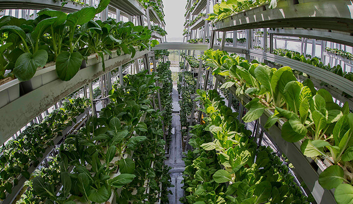 Vertical Farming is the New Agriculture | Shellethics