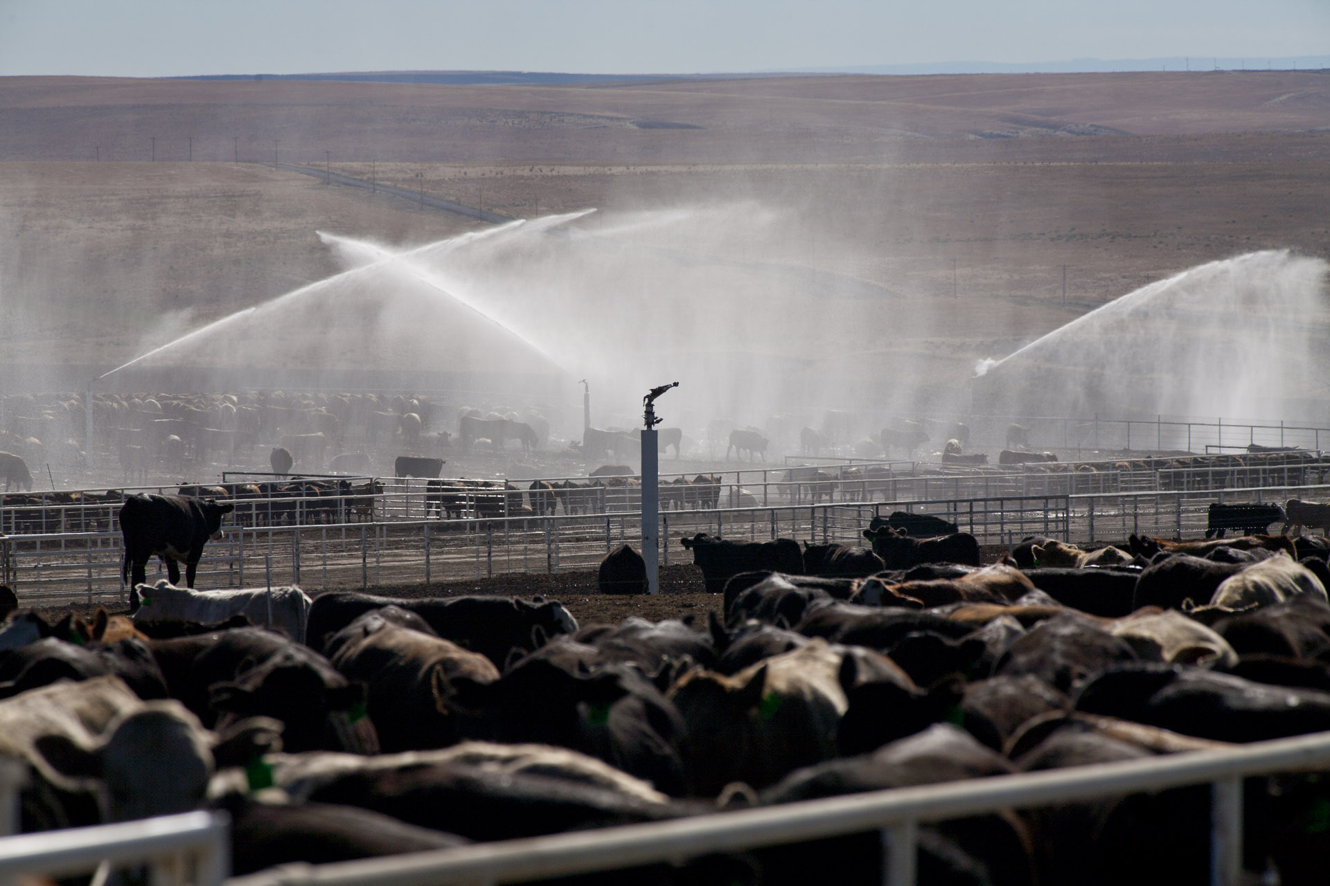 The Environmental Impact Of Animal Agriculture - Dust Surpression Feedlots